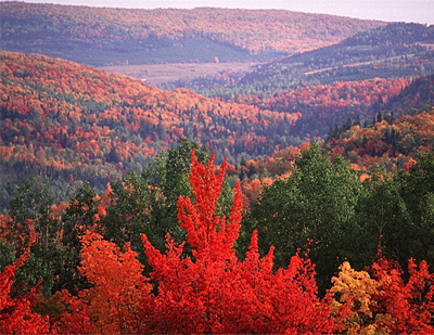 Acadian forest in fall